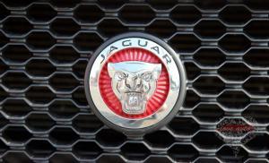 Прокат Jaguar XF NEW на свадьбу 0